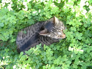 He was so excited to use the clover as cover to pounce on the birds nearby. He never got one, but that didn't stop him from trying...